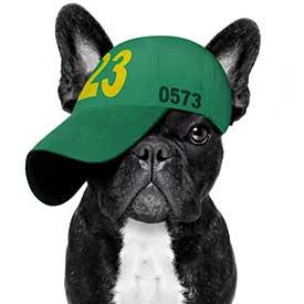 Hund mit Cap